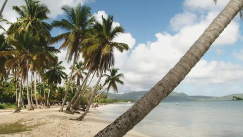 Ein Palmenstrand in der Dominikanischen Republik