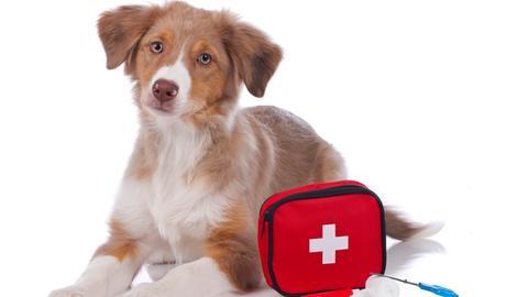 sitzender Hund mit Erste-Hilfe Tasche davor
