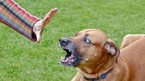 Hund agressiv