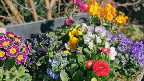 Große bunte Blumenschale