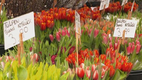 Viele verschiedene Tulpen in Eimern auf einem Markt.