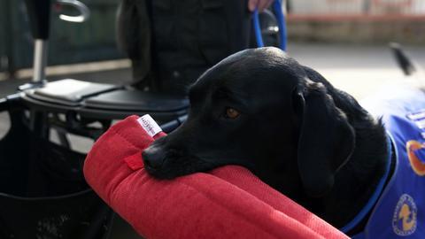 Assistenz-Hund