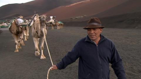 Mann mit Kamelen auf Lanzarote