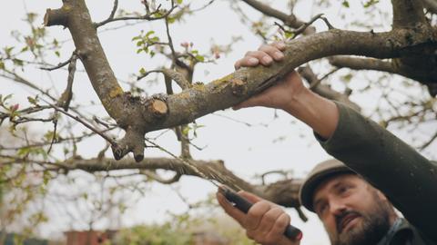 Protagonist sägt den Ast eines Obstbaumes ab.