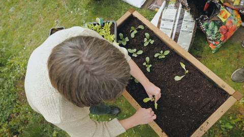 Protagonistin bepflanzt ein Hochbeet.