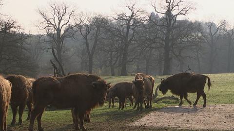 Tierpark-Serie (2/5) | Tierpark Sababurg