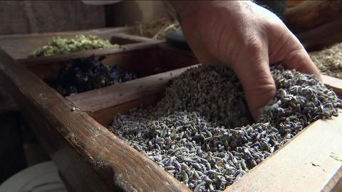 Hand greift in einen Holzkasten mit getrockneten Lavendelblüten.