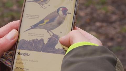 Nahaufnahme eines Handy-Displays: eine Zeichnung des Vogels Stieglitz ist zu sehen.