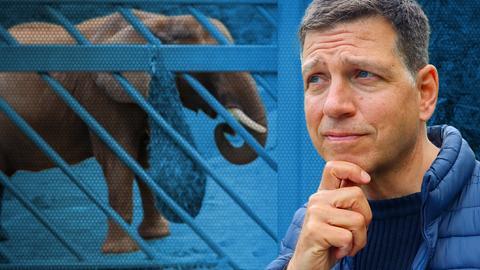 Philipp Engel steht mit skeptischem Blick vor dem Elefantengehege.