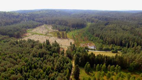 Moorflächen im Burgwald.
