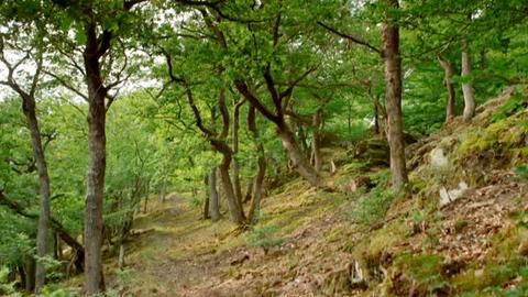 Erlebnis Hessen: Im wilden Rheingauer Wald