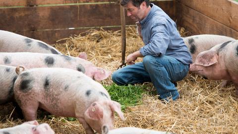 Bio-Landwirt Stefan Itter zwischen seinen Schweinen