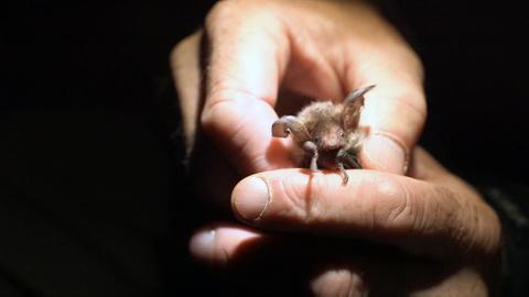 Ein Fledermausbaby