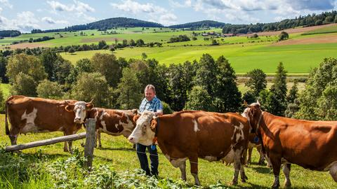Bio-Bauer Oswald mit seinen Kühen auf der Weide.
