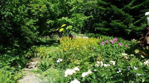 erlebnis hessen - Waldgarten