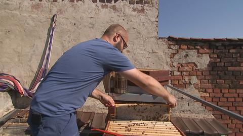 Victor Hernández überprüft auf einem Hausdach einen seiner Bienenstöcke.