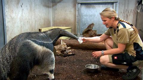 Dr. Nicole Schauerte mit einem Ameisenbären.