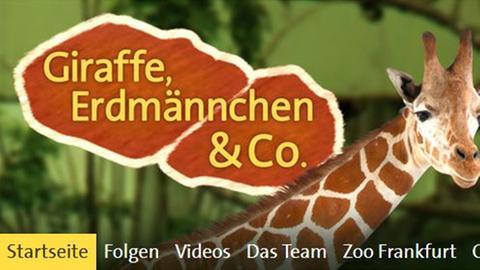 "daserste.de ""Giraffe, Erdmännchen & Co."""