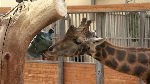 Giraffe, Erdmännchen & Co. | hr-fernsehen.de | Giraffe ...