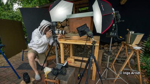 Ingo Arndt fotografiert Bienen.