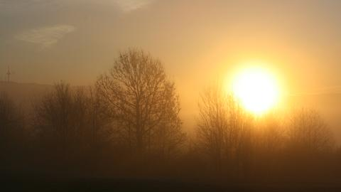 Aufgehende Sonne im Nebel hinter Bäumen.