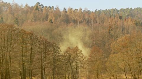 Aufnahme eines extremen Pollenflugs von Erle und Hasel. Sichbar als Nebel im Wald bei Niederaula aufgenommen.