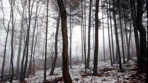 Ein Stück Wald im Nebel.