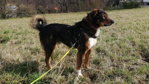 Hund Aaron bei Tiervermittlung mit Herz - hallo hessen