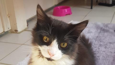 Katze Beauty