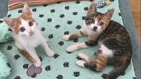 Kater Queck und Katze Pom