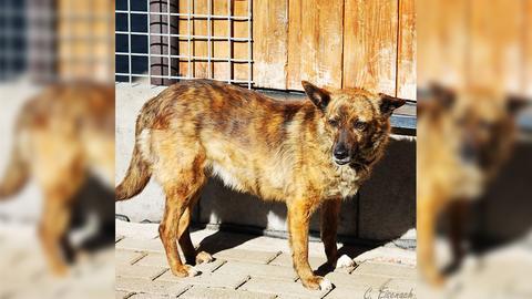 Hund Candy im Tierheim