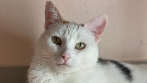 Katze Clarin
