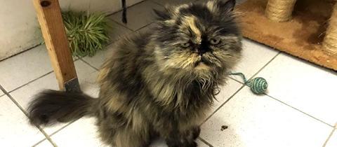 Tierheim Alsfeld - Katze Cloe