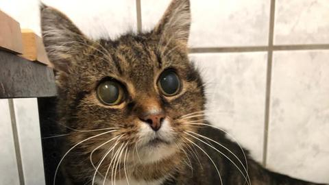 Katze Erna