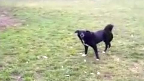 Hund Erol