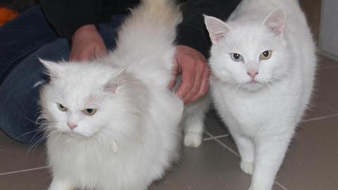 Kater Micu und Vater Felix