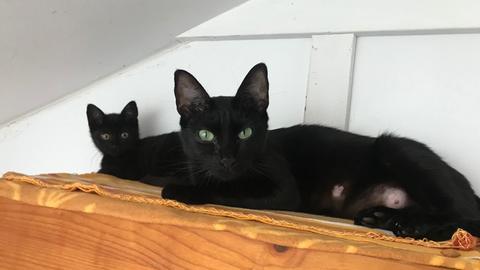 Die Katzenmutter Antonia und ihre Tochter Adele bei Tiervermittlung mit Herz - hallo hessen.