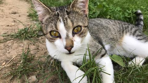 Katze Magnolie