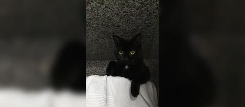 Katze Izzy