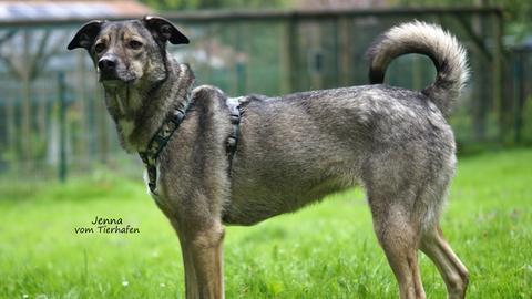 Tiervermittlung mit Herz, Hund Jenna