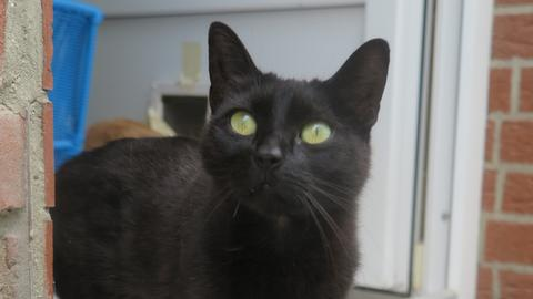 Katze Nina
