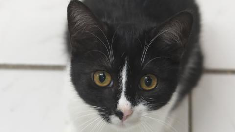 Katze Sanja