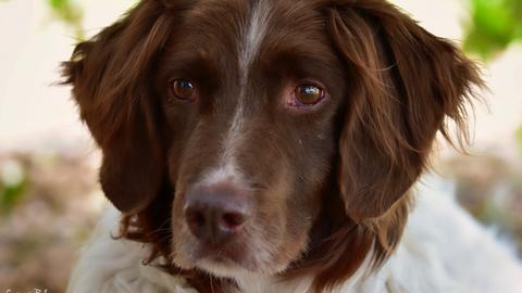 Hund Max