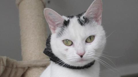 Katze Mia