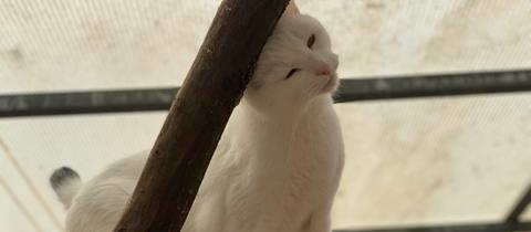 Katze Miez