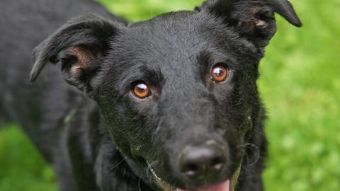 Tiervermittlung mit Herz, Hund Migro