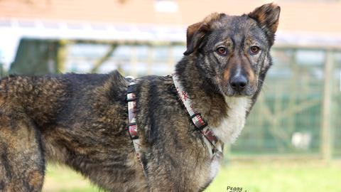 Tiervermittlung mit Herz, Hund Peggy