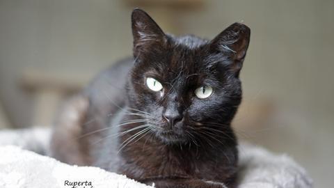 Tiervermittlung mit Herz, schwarze Katze Ruperta mit hellgrünen Augen