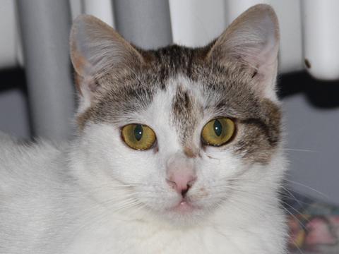Katze Spotty