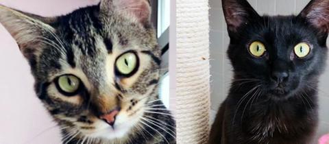 Kater Clarin und Katze Roseta